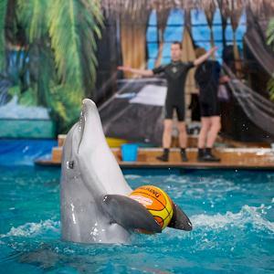 Дельфинарии, океанариумы Гатчины