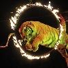Цирки в Гатчине