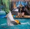 Дельфинарии, океанариумы в Гатчине