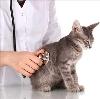 Ветеринарные клиники в Гатчине